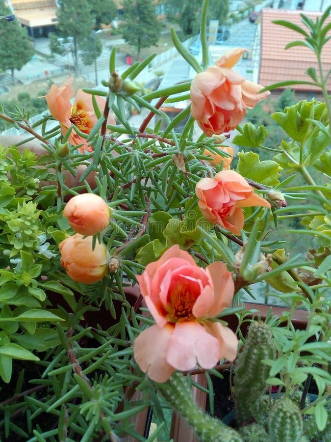 Mój mały ogród zdjęcia stock