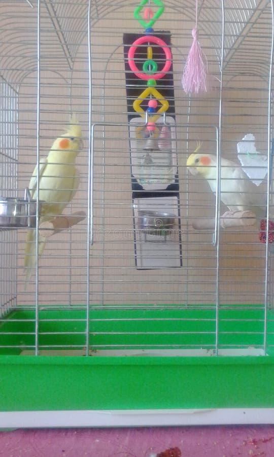 Mój papugi obrazy stock
