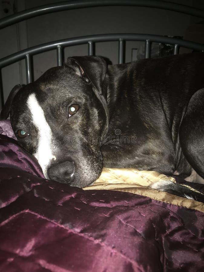 Mój psi Lilly zdjęcia stock