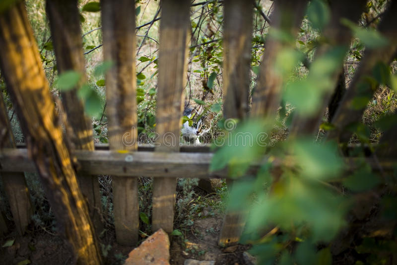 Mój sąsiedni ` s kot odwiedza kot przez dziury w ogrodzeniu zdjęcie stock