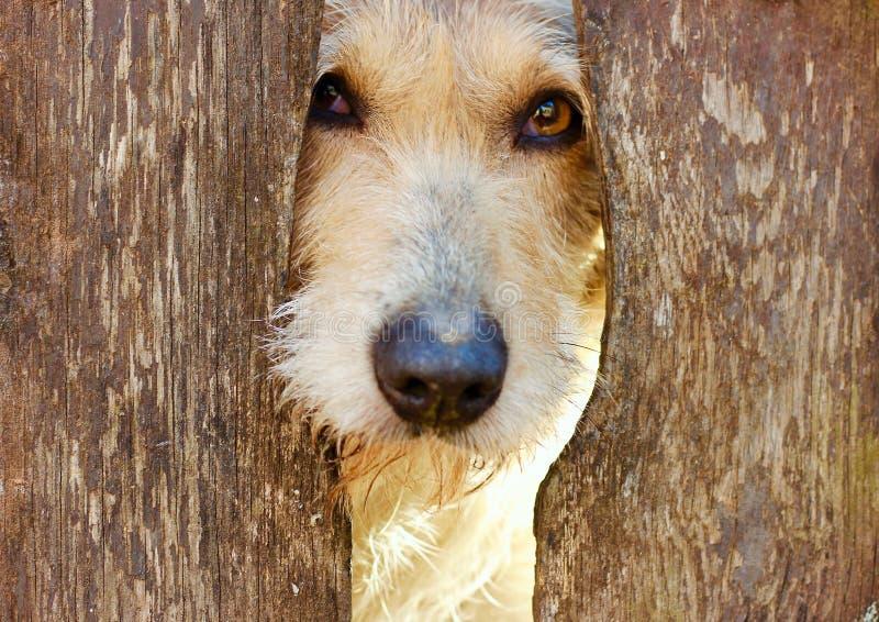 Mój słodki lojalny oko pies fotografia stock