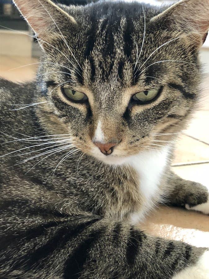 Mój uroczy kot zdjęcia royalty free