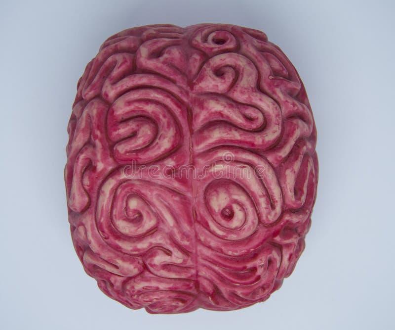mózg zdjęcia stock