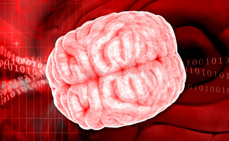 Download Mózg ilustracji. Ilustracja złożonej z cerebellum, intelekt - 42525287