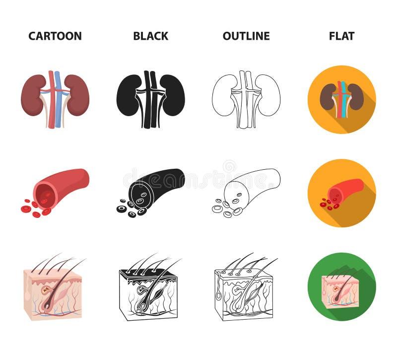 Mózg, cynaderki, naczynie krwionośne, skóra Organ ustawiać inkasowe ikony w kreskówce, czerń, kontur, mieszkanie symbolu stylowy  ilustracji