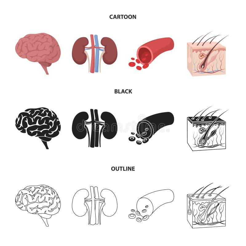 Mózg, cynaderki, naczynie krwionośne, skóra Organ ustawiać inkasowe ikony w kreskówce, czerń, konturu symbolu stylowy wektorowy z ilustracji
