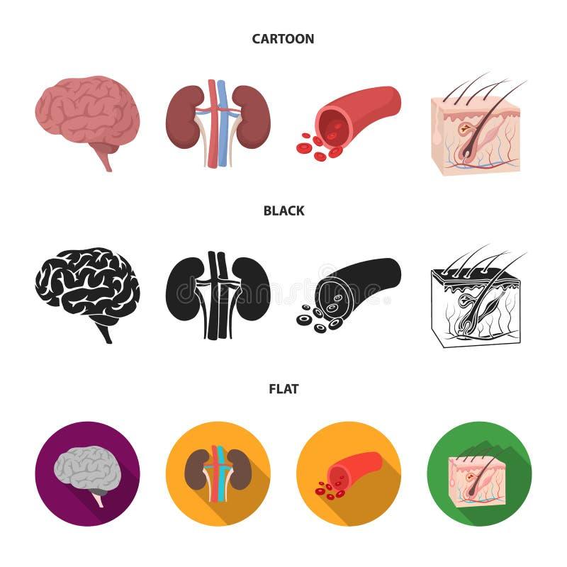 Mózg, cynaderki, naczynie krwionośne, skóra Organ ustawiać inkasowe ikony w kreskówce, czerń, mieszkanie symbolu stylowy wektorow ilustracji