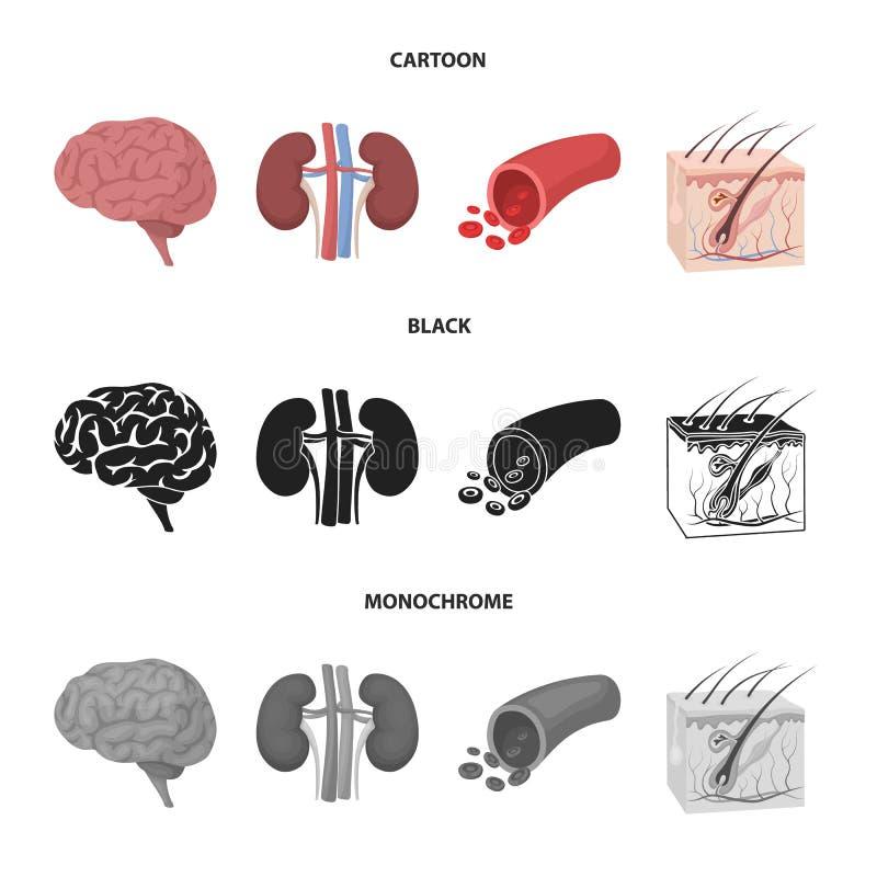 Mózg, cynaderki, naczynie krwionośne, skóra Organ ustawiać inkasowe ikony w kreskówce, czerń, monochromu symbolu stylowy wektorow ilustracja wektor