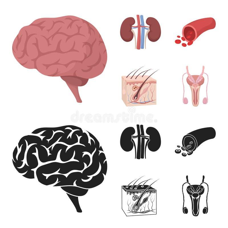 Mózg, cynaderki, naczynie krwionośne, skóra Organ ustawiać inkasowe ikony w kreskówce, czerń symbolu zapasu stylowa wektorowa ilu ilustracji