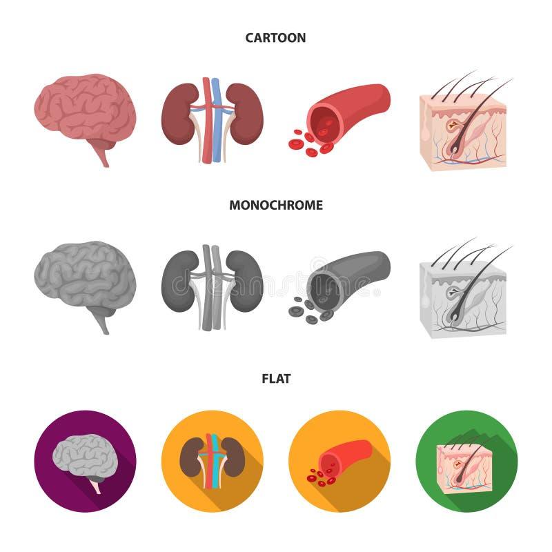 Mózg, cynaderki, naczynie krwionośne, skóra Organ ustawiać inkasowe ikony w kreskówce, mieszkanie, monochromu symbolu stylowy wek ilustracji