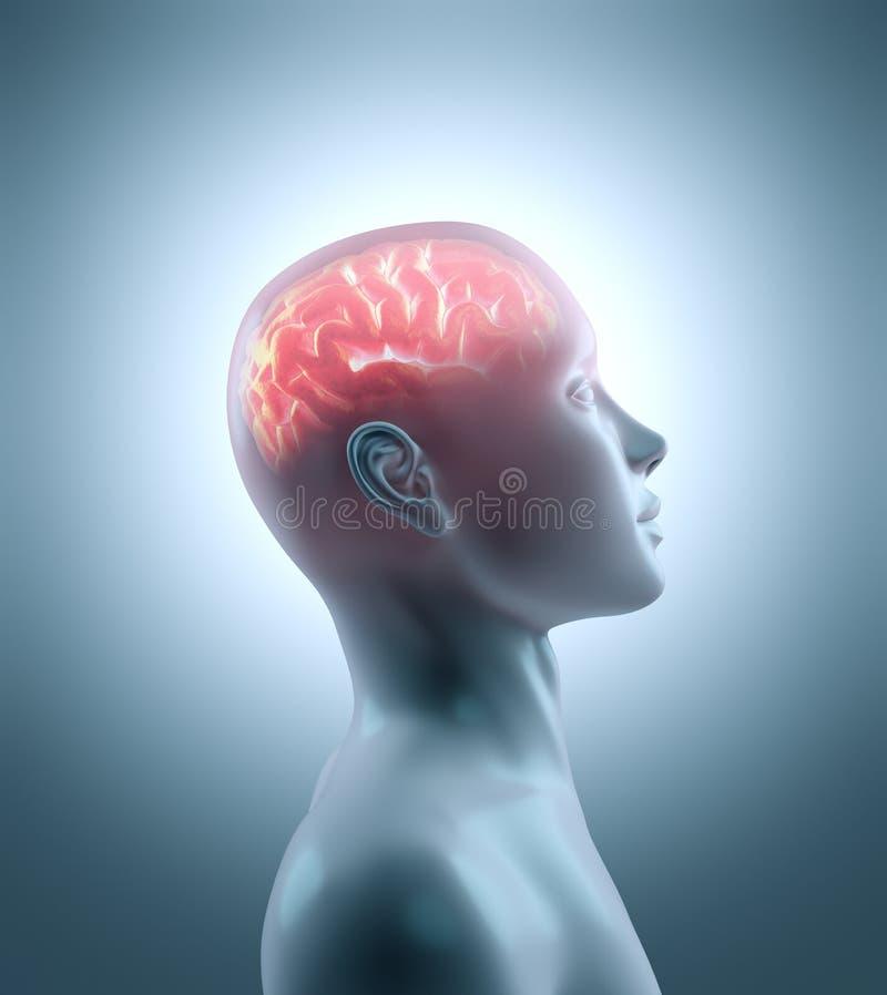 mózg gorący royalty ilustracja