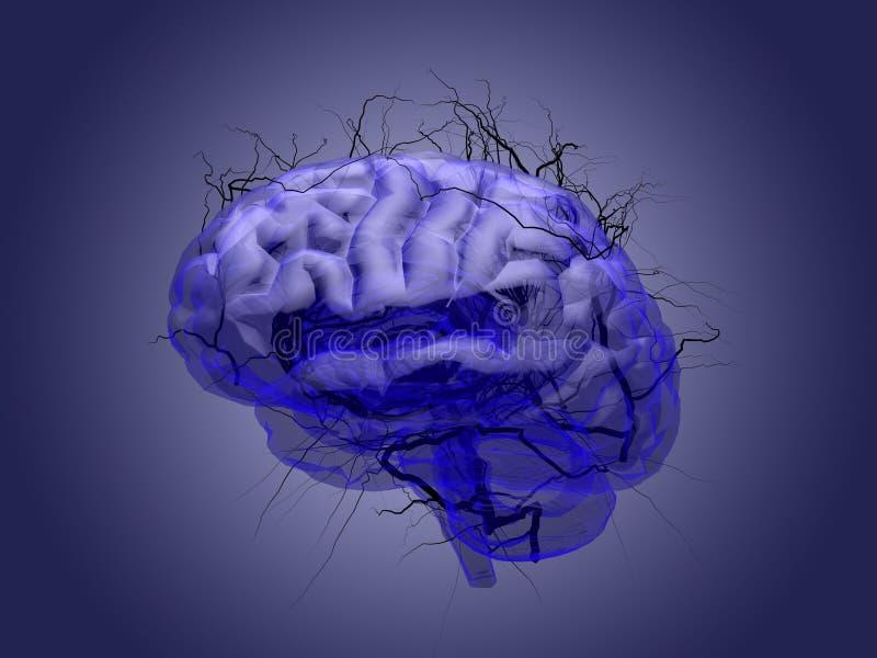 Mózg korzeniowy pojęcie korzeniowy dorośnięcie w formie ludzkiego stanika ilustracji