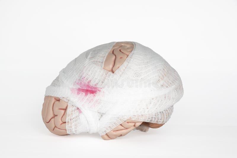 Mózg model z gazy opakowaniem obrazy stock