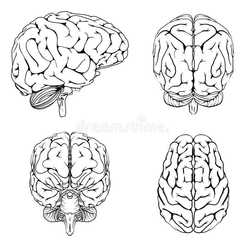 Mózg od odgórnej strony plecy i przodu ilustracji