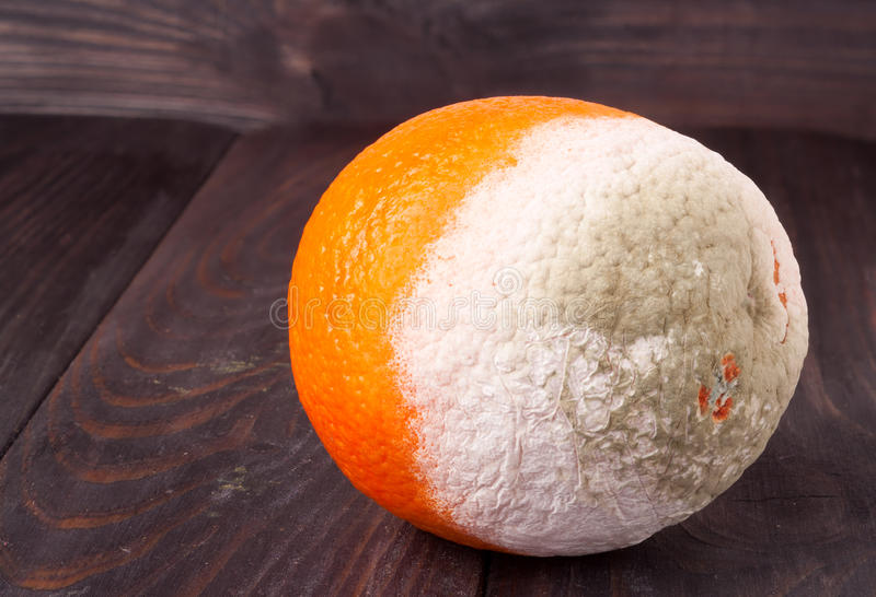 Möglig apelsin på en svart tavlanärbildmakro royaltyfri bild