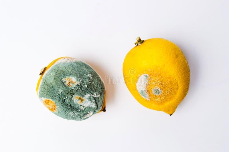 Möglig citronfrukt på vit bakgrund arkivfoton