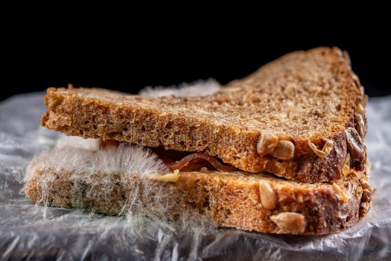 Möglig smörgås med rökt kött i en plastpåse Mörkt bröd med korn som täckas med den vita formen royaltyfria bilder