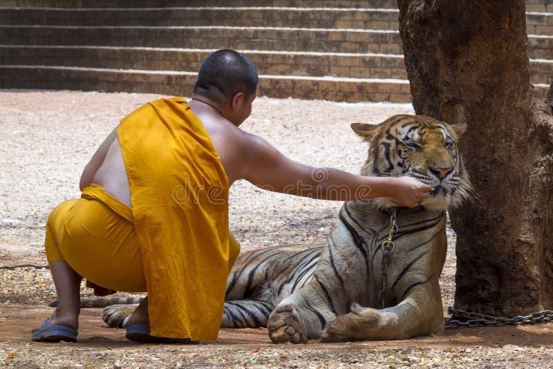Mönch und Tiger stockfotos
