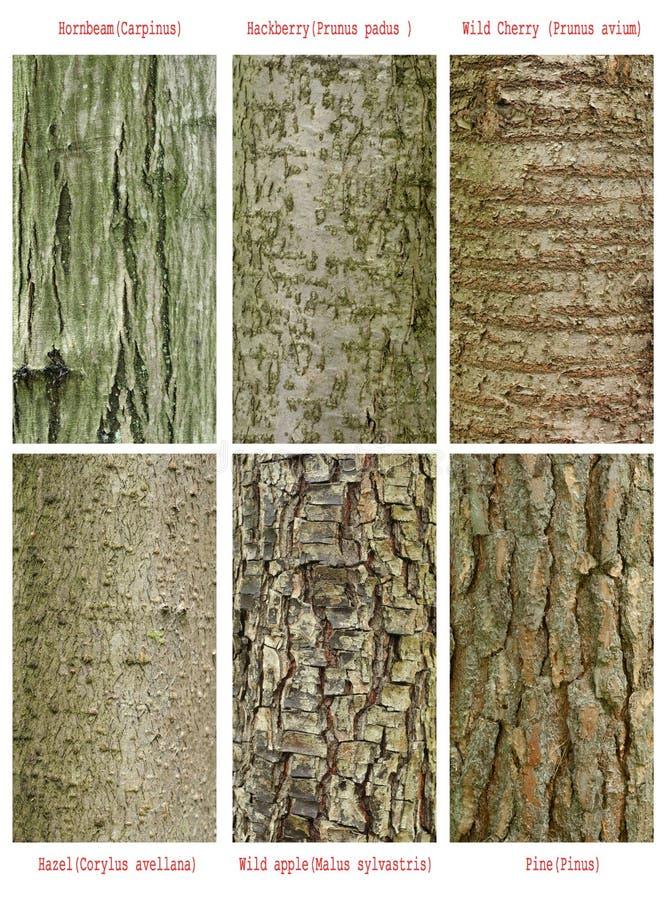 mönsan treesstammen royaltyfria foton