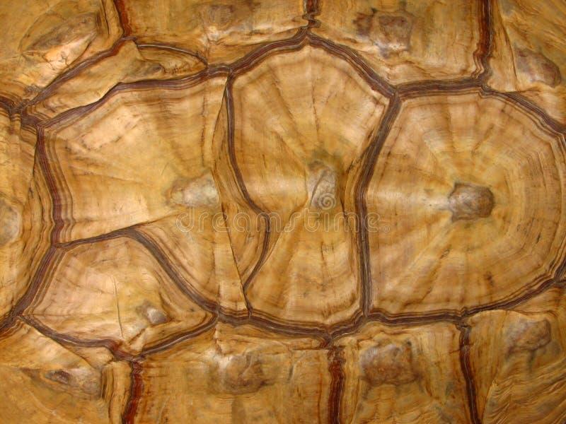 mönstrad skalsköldpaddan royaltyfria bilder