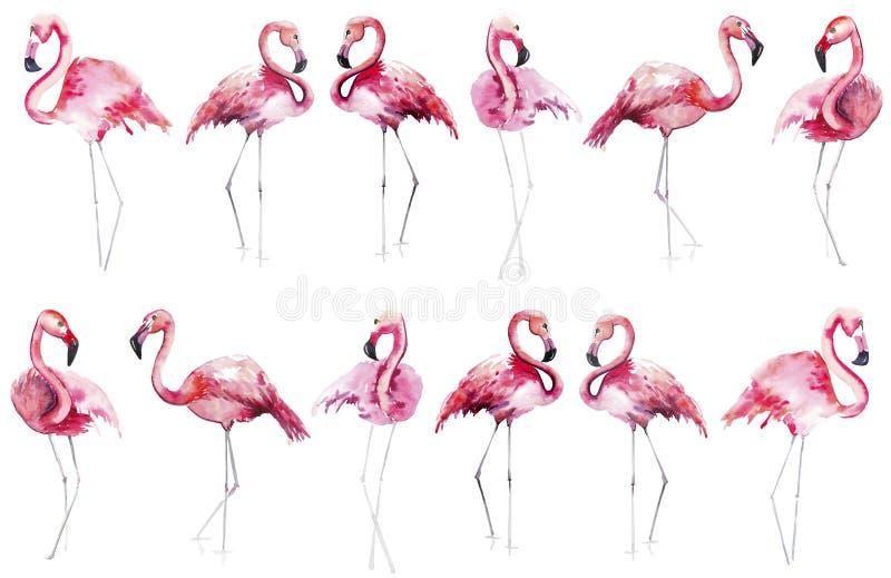 Mönstrar rosa flamingo för ljus älskvärd för hawaii för anbud försiktig sofistikerad underbar tropisk strand djur lös sommar vatt royaltyfri illustrationer