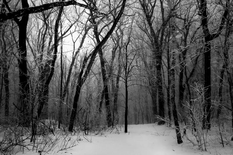 mörk dimmaskogvinter arkivfoton