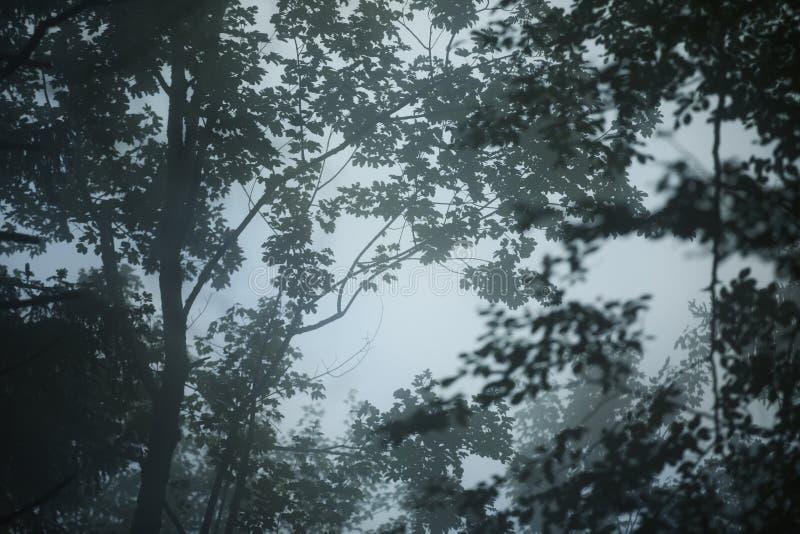 Mörk dimmig skogbakgrund royaltyfri foto