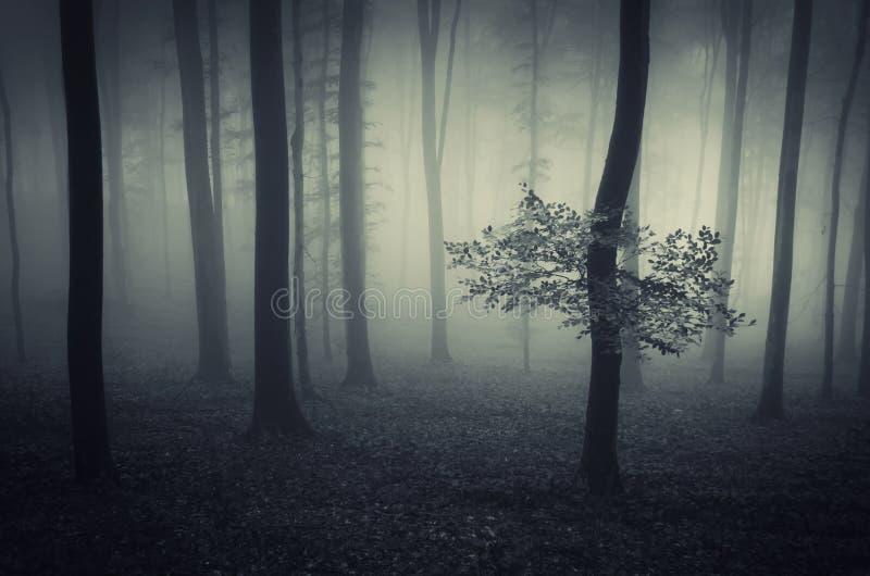 Mörk fantasiskog med dimma royaltyfri fotografi