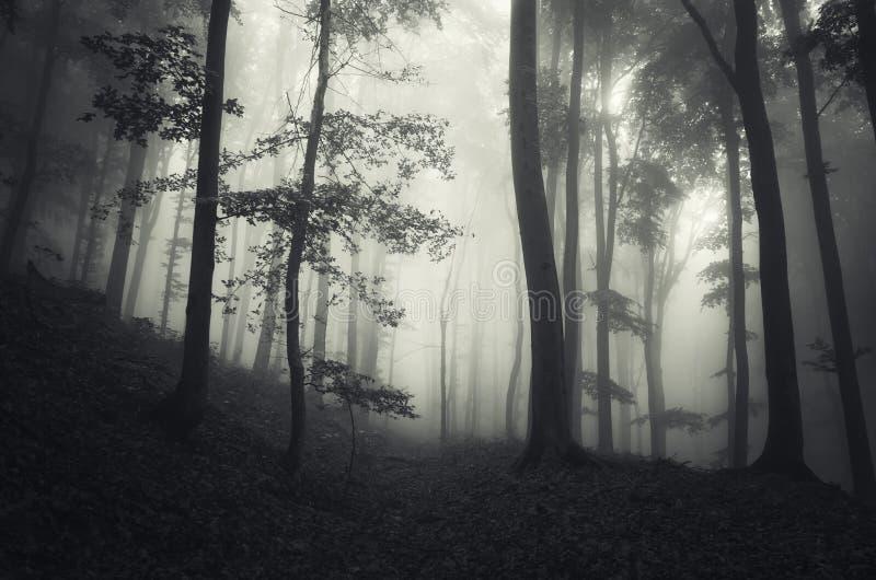Mörk fantasiskog med mystisk dimma på allhelgonaafton royaltyfria foton