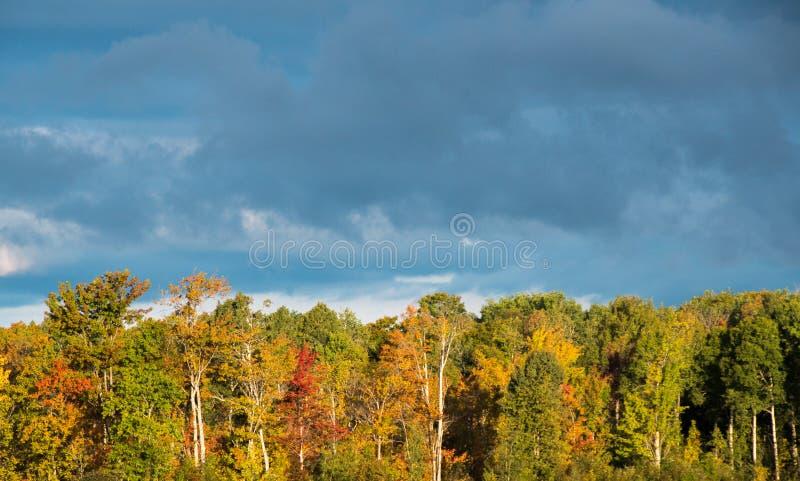 Mörk himmel- och molnbakgrund med sidan tände träd i höst royaltyfria bilder