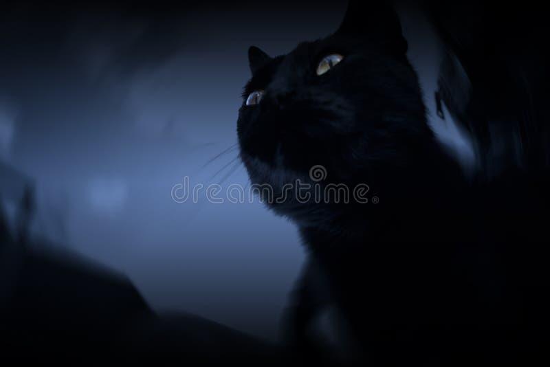 Mörk katt arkivfoton