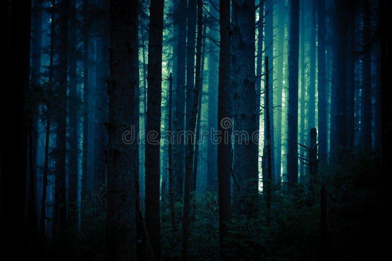 Mörk kuslig skog arkivfoton
