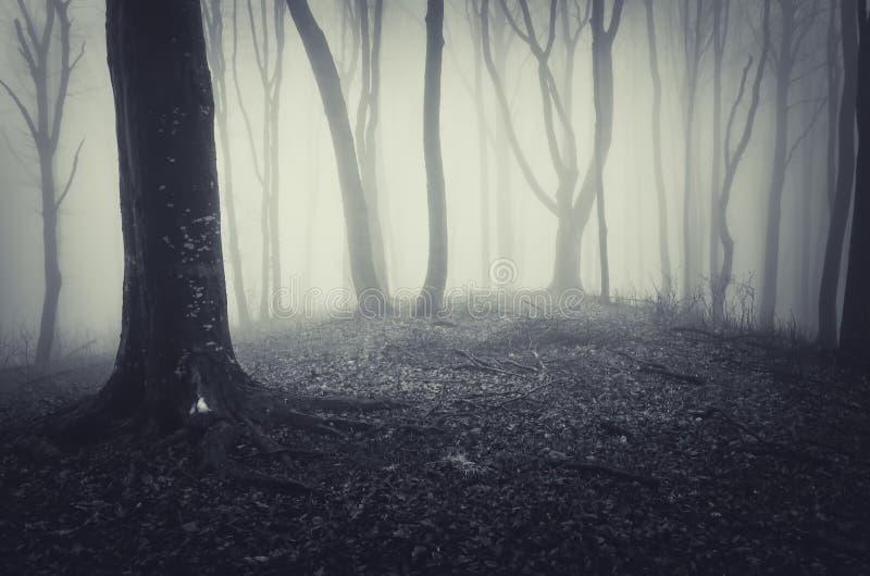 Mörk läskig spöklik skog för allhelgonaafton med dimma arkivbild