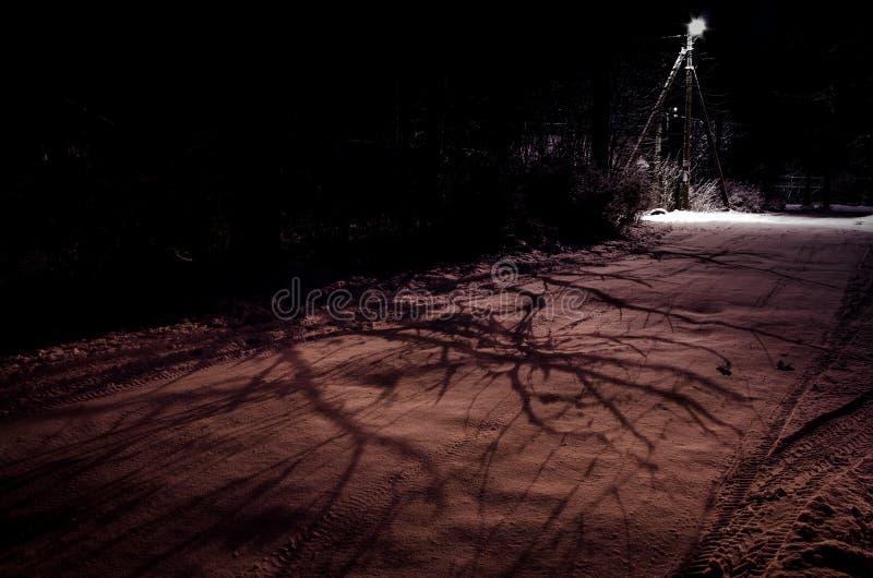 Mörk lansdcape för kuslig natt Skuggor av filialerna på vägen som göras ljusare av mystikerlyktstolpen fotografering för bildbyråer
