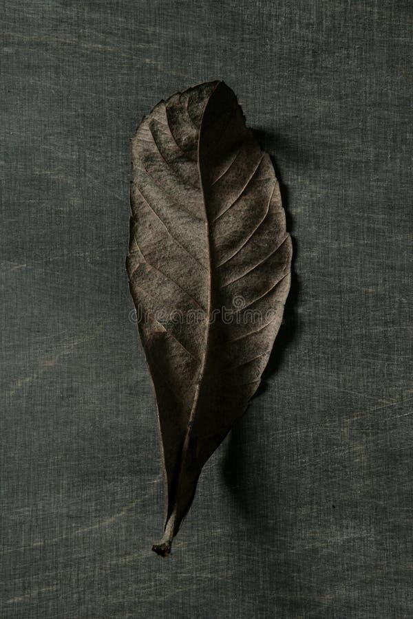 mörk leaf för höstbakgrund över skuggor royaltyfria foton