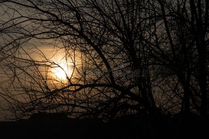 Mörk moody sunset genom trädgrenarna arkivfoto