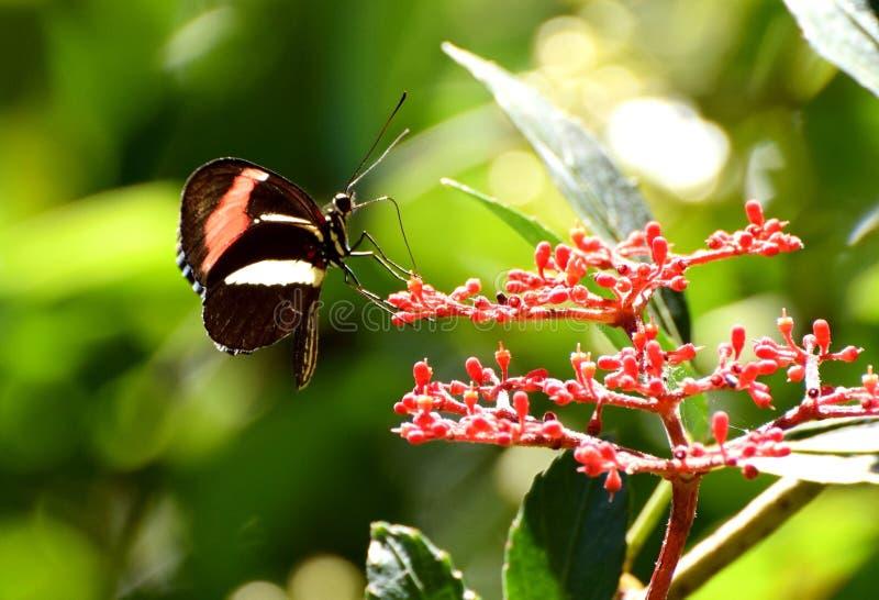 Mörk mycket liten fjäril arkivbild
