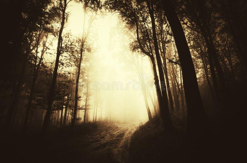 Mörk mystisk skog för banaho med dimma arkivfoto