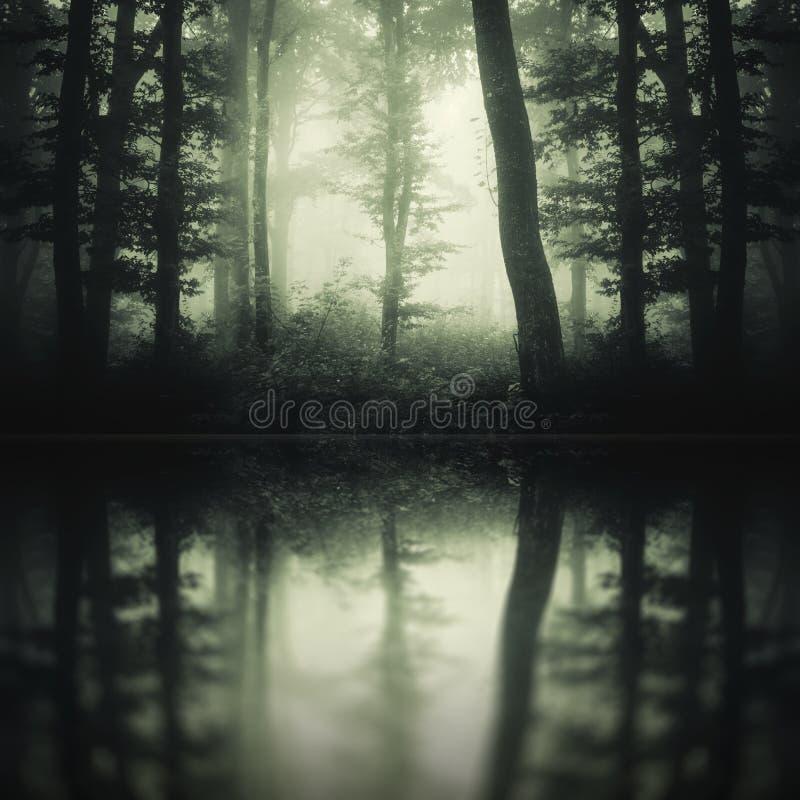 Mörk mystisk skogreflexion fotografering för bildbyråer