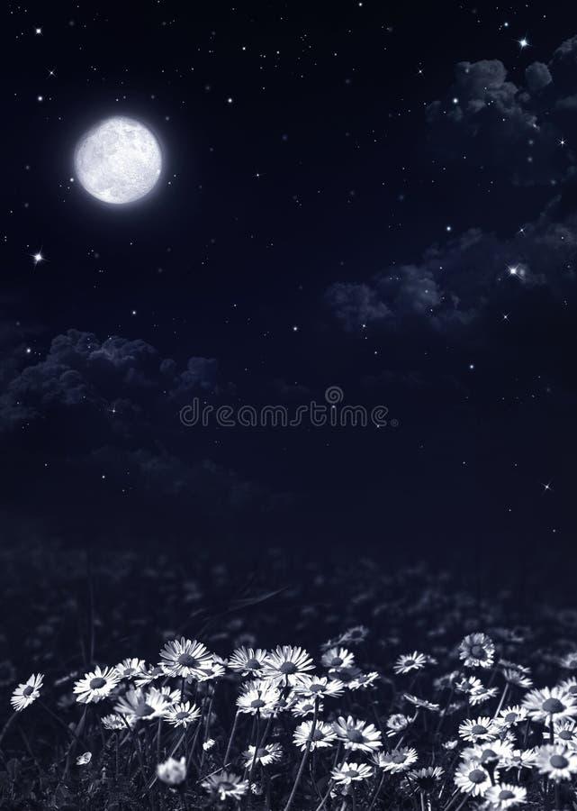 Mörk natt och vita tusenskönor arkivfoton
