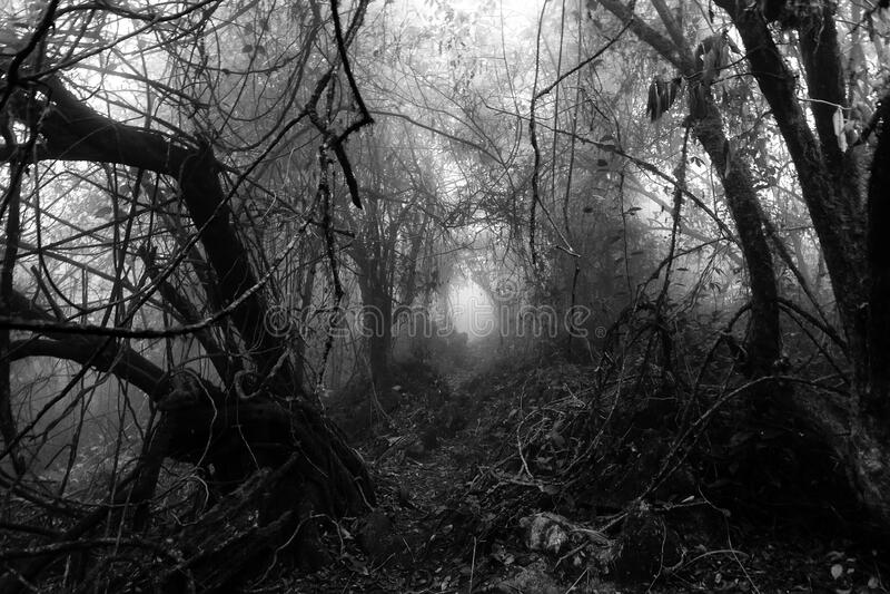 Mörk och dyster naturlig tunnel arkivfoto