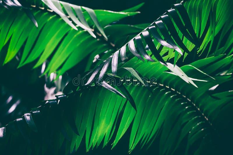 Mörk palmbladbakgrundsbild royaltyfri fotografi