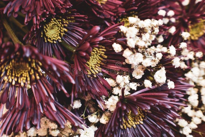 Mörk purpurfärgad bukett för New England aster royaltyfria foton