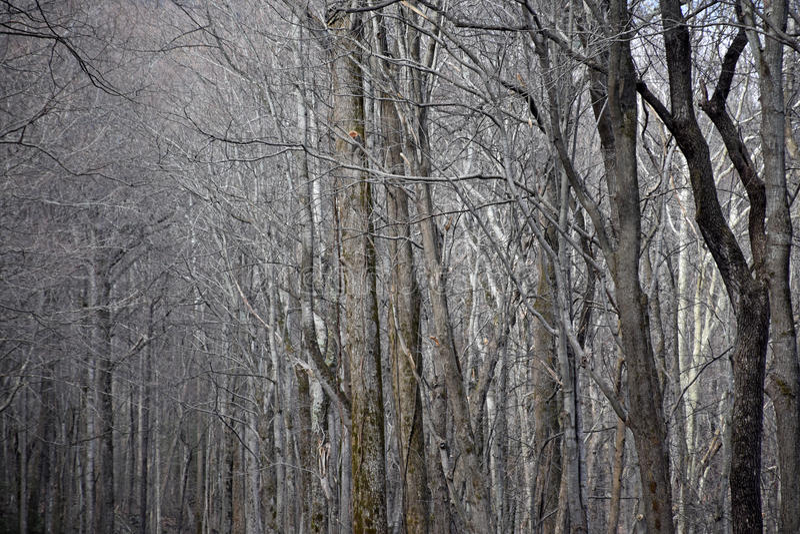 mörk skog royaltyfri foto
