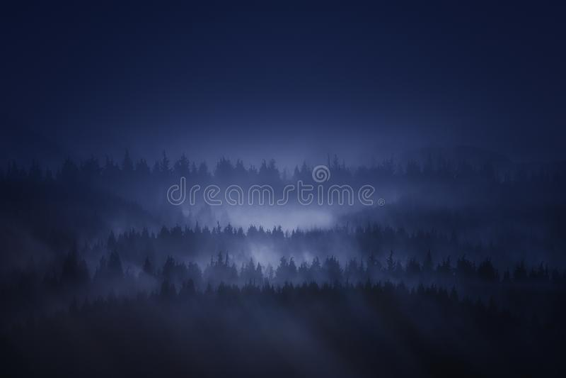 Mörk skog i berget på natten royaltyfria foton