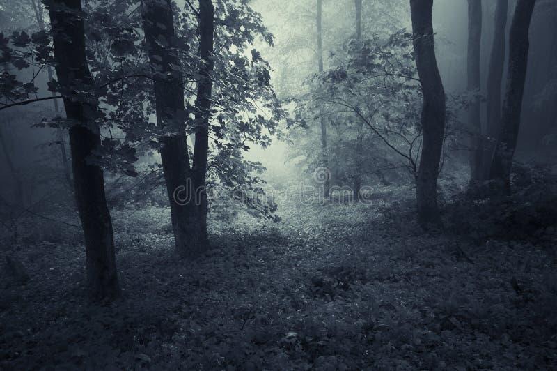 Mörk skog med blå ogenomskinlighet arkivfoto