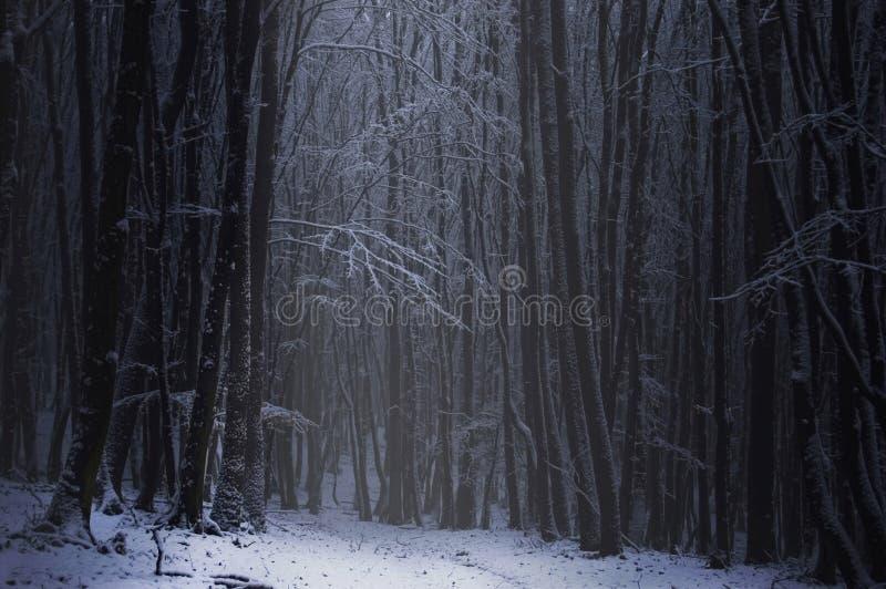 Mörk skog med insnöad vinter arkivbilder