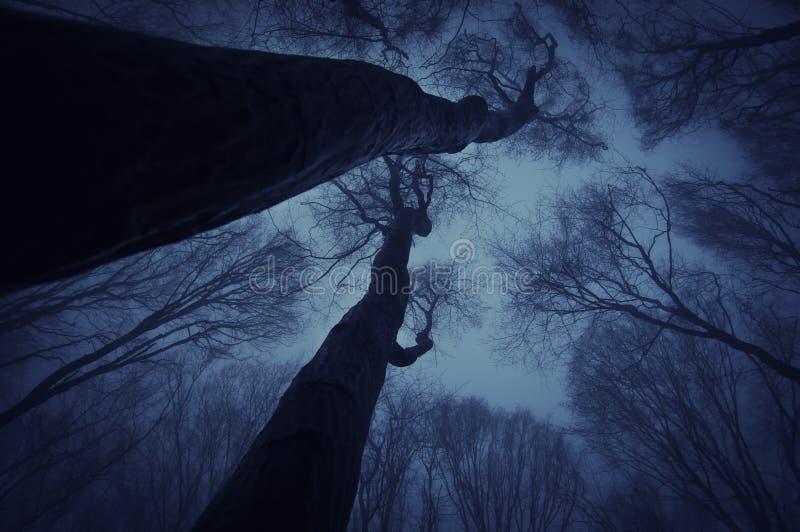 Mörk skog med träd som når upp i markisen på halloween arkivfoton