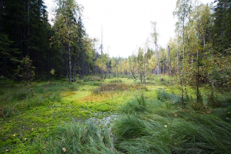 Mörk skogbakgrund arkivfoto