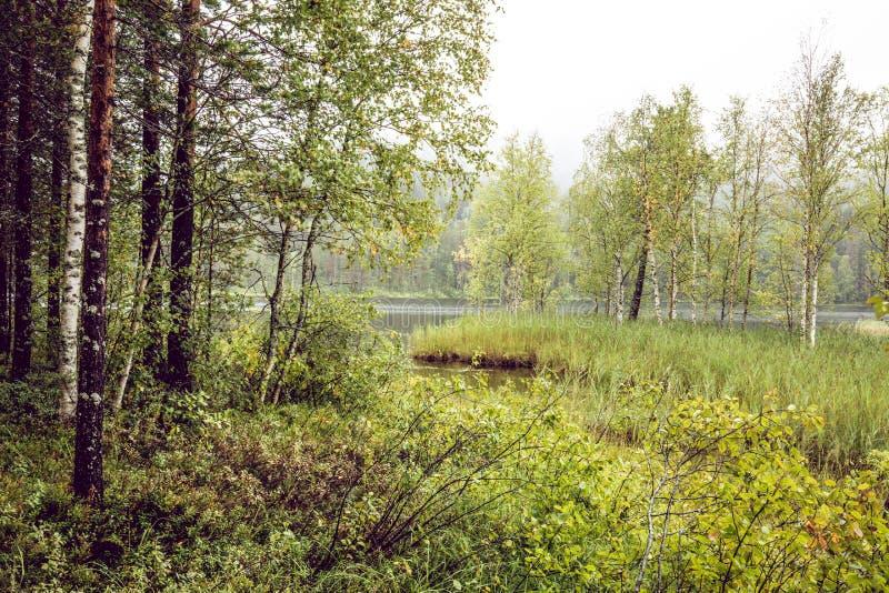 Mörk skogbakgrund arkivfoton